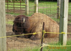 June 12, 2007 Buffalo single (1)